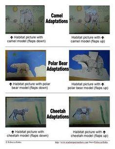 Students create interactive models showing the physical adaptations of 6 animals.  Priced product.