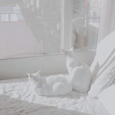 43 Trendy Ideas For Cats White Aesthetic