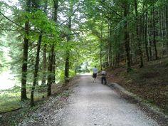 Seva de Irati (Navarra):