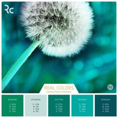 Make a wish!  Our users create the most amazing and inspiring color palettes! ❤️❤️❤️  #findinspiration #magnificent #colorpalettes #realcolors #greenshades #nature #color #dandelion _________________________________Get Real Colors for iPhone: http://www.itunes.com/apps/realcolors Or for Android: http://goo.gl/NtPx8