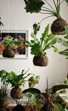 Unique Hanging Kokedama Ball Ideas for Hanging Garden Plants selber machen ball