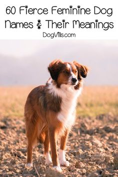 If youre looking for some fantastic strong female dog names and meanings, youll adore our list! Check out 60 of the fiercest feminine names for your pup! Unique Female Dog Names, Girl Dog Names Unique, Puppies Names Female, Girl Names, Cute Puppy Names, Cute Names For Dogs, Southern Dog Names, Feminine Names, Names With Meaning