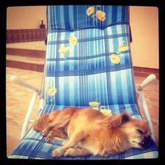 Doggish Afternoon