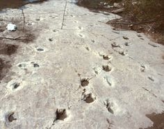 Dinosaur Valley TX, a review of paleo sites in Texas plus young earth controversies debunked