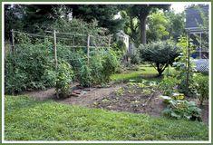 Vegetable Gardening 101: 5 Gardening Basics for Beginners