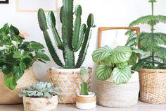 Wat ik zo leuk vind aan stylen met planten is dat je eindeloos kunt variëren. Je kunt met dezelfde groep planten maar met een andere aankleding of setting, erg veel verschillende stijlen neerzetten.