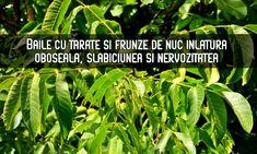 √ Articol documentat    Din tărâțele de grâu și frunzele de nuc se poate obține un decoct util în stările de slăbiciune, oboseală, tulburări nervoase și afecțiunile pielii.    Mai jos puteți găsi câteva rețete recomandate de medici și