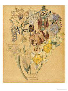 Mont Louis, Flower Study, 1925  by Charles Rennie Mackintosh