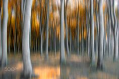 (abstract) GHOST FOREST II - In the Ghosts forest Nienhagen at Baltic Sea, No.II Im Gespensterwald in Nienhagen an der Ostsee, Nr. II