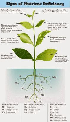 Symptoms of Plant Nutrient Deficiencies