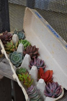 For a housewarming you could give them some of our succulents to plant?