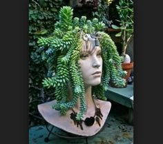 Head Planter #succulent #succulents #burrito #donkeytail #medusa #diyprojects