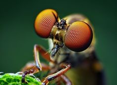 ok, so usually i hate bugs, but i've loving the subjects for this set of photographs...very inspiring!