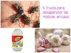 5 Trucos para eliminar o espantar las moscas en casa ~ cositasconmesh