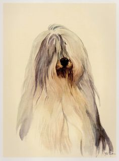 GORGEOUS VINTAGE DOG PRINT - OLD ENGLISH SHEEPDOG  This beautiful illustration was carefully removed from a vintage 70s German book. You are