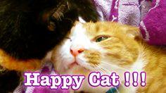 幸せな猫 Happy Cat !!! 見ていて心温まる…2匹の猫 × 2倍の幸せ♪〜 - Cutest Two Cats grooming ever.