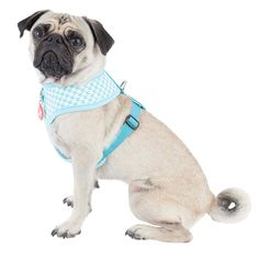 Beautiful Hounds tooth pattern in Aqua and White The Puppia Aqua Aggie Harness A has a modern Hounds tooth pattern, with little silver hearts and a rubber Puppia label, the lining is made from cotton for the upmost comfort for your do Dog Harness, Dog Leash, Flea Treatment, Dog Safety, Sleeping Dogs, Pug Love, New Puppy, Fleas, Dog Owners
