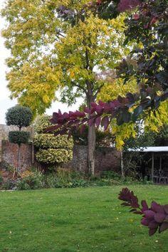 Autumn garden ideas - what works and what doesn't - The Middle-Sized Garden Garden Privacy, What Works, English Country Gardens, Colorful Garden, Autumn Garden, Garden Furniture, Shrubs, Perennials, Garden Design