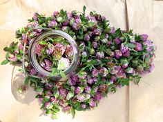 Red Clover Salve How To