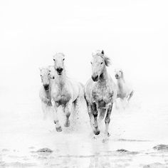 Wild White Horses, Black and White Photography, Modern Minimal Nature Photograph, Animals, Nautical, Dreamy - Ghost Riders