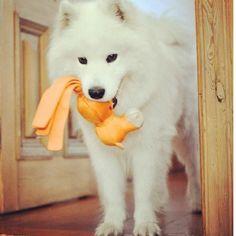 Pretty dog!
