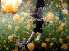 A snorkeler swims among golden jellyfish in Palau's Jellyfish Lake in this National Geographic Photo of the Day from our Your Shot community.