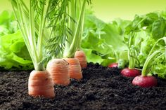 Get The Best Vegetable Seeds  Visit http://www.findcompany.in