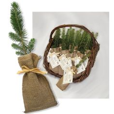 Remembrance Trees - Live evergreen sympathy tree seedling funeral favors in burlap for memorial gifts. Environmental and personalized memorial tree. Memory Tree, In Memory Of Dad, In Loving Memory, In Memory Of Gifts, Funeral Memorial, Memorial Gifts, Memorial Ideas, Memorial Stones, Wedding Memorial