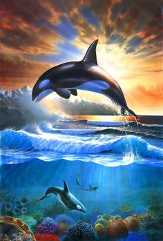 Adrian Chesterman Digital Art - Orcas by MGL Meiklejohn Graphics Licensing Orca Art, Dolphin Art, Whale Art, Under The Water, Under The Sea, Orcas, Whale Painting, Underwater Art, Water Animals