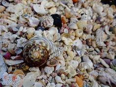 Shells out near the light house #portfairypics #portfairy #swim #beach #ocean #shell #shells #camera #capture #photo #photograph #photography #nature #greatoceanroad #great_captures_nature #create #share #like #follow #ig_myshots #igmasters #ig_great_shots #broken #color #colours #australia by 6seasons