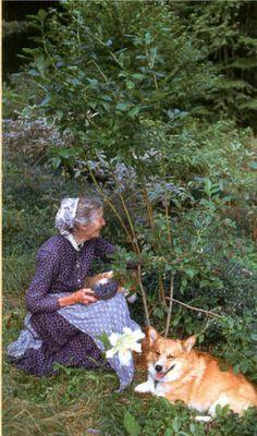 Tasha Picking berries with her corgi