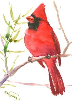 Cardinal bird art small watercolor original one of a kind painting 7 x 5 in red cardinal small northern cardinal painting cardinal bird gift by ORIGINALONLY on Etsy