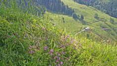 Hiking in Maria Alm, Austria