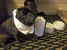 Room service??? Again??? P1060283