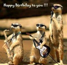 Gefeliciteerd - Happy Birthday Funny - Funny Birthday meme - - Gefeliciteerd More The post Gefeliciteerd appeared first on Gag Dad. Happy Birthday Funny, Happy Birthday Quotes, Happy Birthday Images, Happy Birthday Greetings, Birthday Pictures, Birthday Memes, Funny Happy Birthdays, Funny Animal Photos, Funny Animals