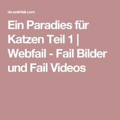 Ein Paradies für Katzen Teil 1 | Webfail - Fail Bilder und Fail Videos