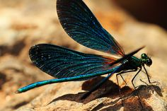 macro wings by Murat Şahin on 500px