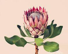Tropical flowers, Protea botanical art, Unique floral art. Original fine art photograph. King Protea. Flower art. Flower photography, home decor, office decor. - Edit Listing - Etsy
