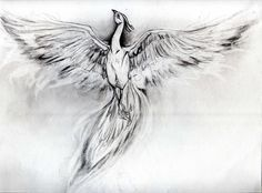 I love this so much!! ~ Phoenix Sketch by ~Kodachiku on deviantART Black and white. Ok to use for Tattoo with request for pictures of finished product.