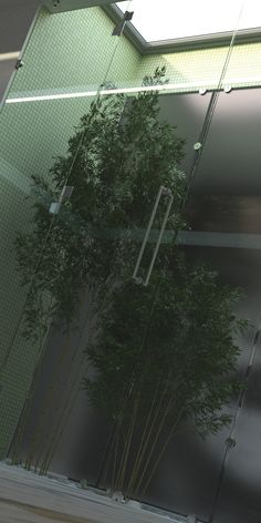 Render Engine Nvidia Iray Rendering Engine, Autocad, Italy, Digital, Drawings, Flowers, Plants, Workshop, Italia