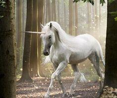White Unicorn Forest