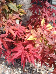 Beautiful fall foliage leaves fall pictures fall decorations Halloween decorations