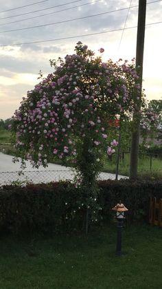 Güller açtı 🌙şe🌹geldi😊