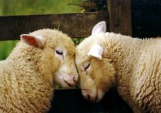 I woolly love ewe! by jacqamoe on Flickr