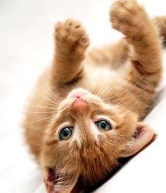 Basic Training | Cat Behavior Associates