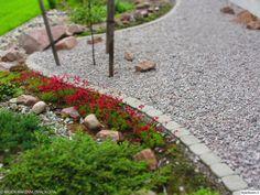 istutus,piha,ulkotilat,puutarha,kasvatus,viherkasvit,pihakasvit,betoni,asetelma,kivetys