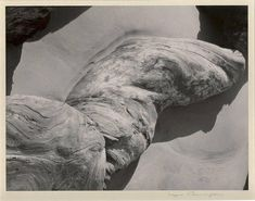 For Sale on - Log on Beach, Silver Gelatin Print by Imogen Cunningham. Offered by Weston Gallery. History Of Photography, Art Photography, Straight Photography, Imogen Cunningham, Alfred Stieglitz, Artist Biography, Studio Portraits, Black And White Photography, American Art