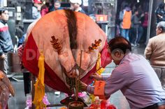 Pigs of God festival held at the Tsuhsih Temple in Sanxia  Taiwan