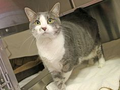 Mrs Jones (ID: A396359) has been adopted!
