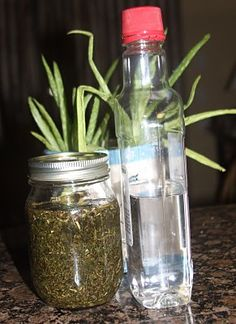 Making your own Stevia extract from the plant leaves